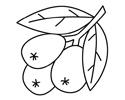 枇杷果简笔画图片